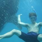 セブのJIC CEBUで人生が変わった。週末はジンベイザメと泳ぐ充実の毎日