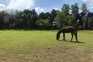 学校内にはサッカーゴールがあって、馬もいる
