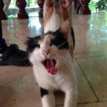 猫好きはうれしいけど、動物嫌いは注意!MITのオーナーの家は動物園